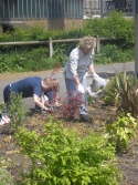 Aireville pupils at LMS garden workday
